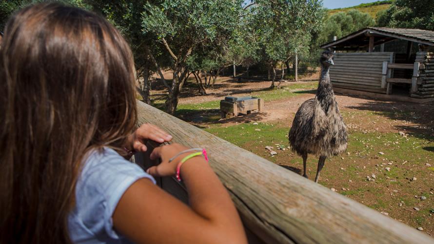 Niña observa un emú en Sendaviva. CEDIDA