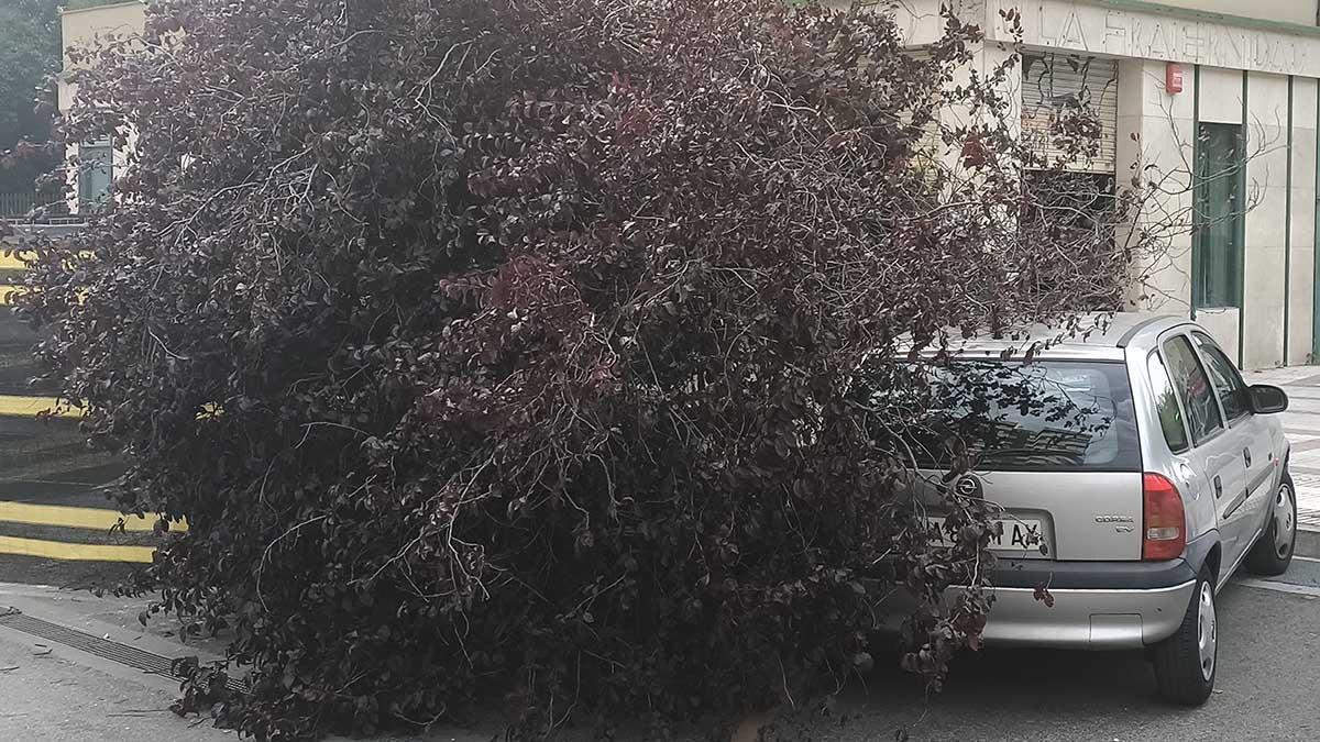 Un árbol cae sobre un coche por fuertes rachas de viento en Pamplona.